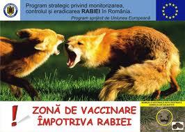 În judeţul Harghita continuă vânătorile de control pentru verificarea eficacităţii vaccinului antirabic, administrat vulpilor din pădurile judeţului