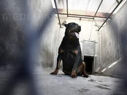 Patru câini poliţişti din Harghita ies la pensie.