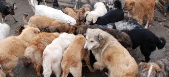 Colecta publica inedita pentru câinii din Covasna!