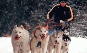 O nouă competiţie de sprint cu atelaje canine în Harghita!