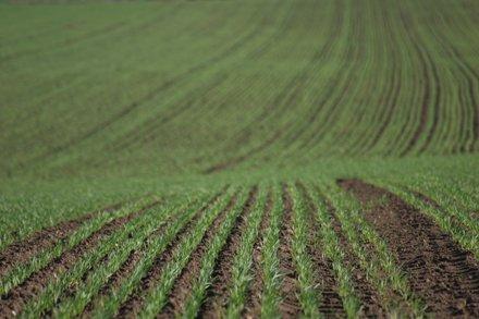 Valoarea terenurilor agricole s-a dublat sau chiar s-a triplat în ultimii 4 ani în judeţul Mureş