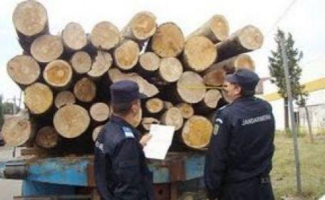 Cinci persoane au fost prinse de jandarmii mureşeni furând lemne
