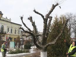 Tg.mureşenii care nu toaletează copacii care depăşesc aliniamentul proprietăţii private pot fi sancţionaţi cu 100 de lei