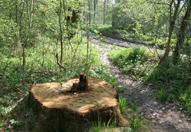 Primăriile nu vor mai putea tăia niciun copac fără aprobare de la Protecţia Mediului, a anunţat azi, la Tg.Mureş, deputatul UDMR Borbely Laszlo
