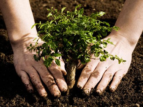 Elevi din toată Europa plantează arbori în Braşov