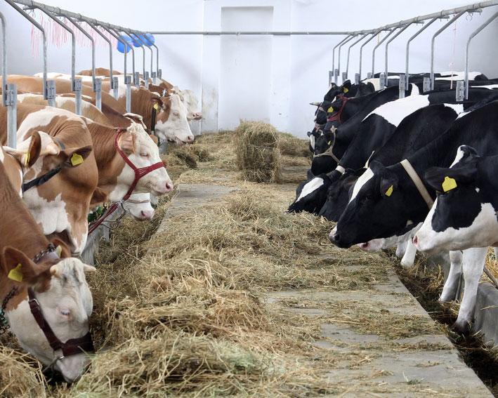 950 de ferme din Mureş vor fi verificate de APIA