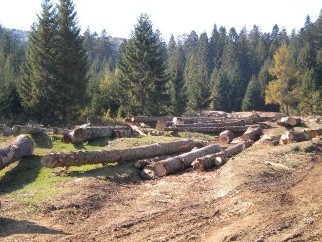 Ministrul Mediului şi Schimbărilor Climatice, Korodi Attila a declarat azi, cu ocazia unei vizite de lucru în judeţul Covasna, că sistemul de urmărire on-line a trasabilităţii lemnului îşi arată deja eficienţa