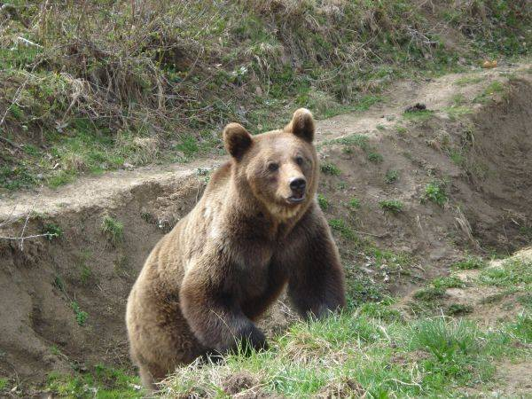 În Harghita a crescut numărul pagubelor provocate de animale sălbatice