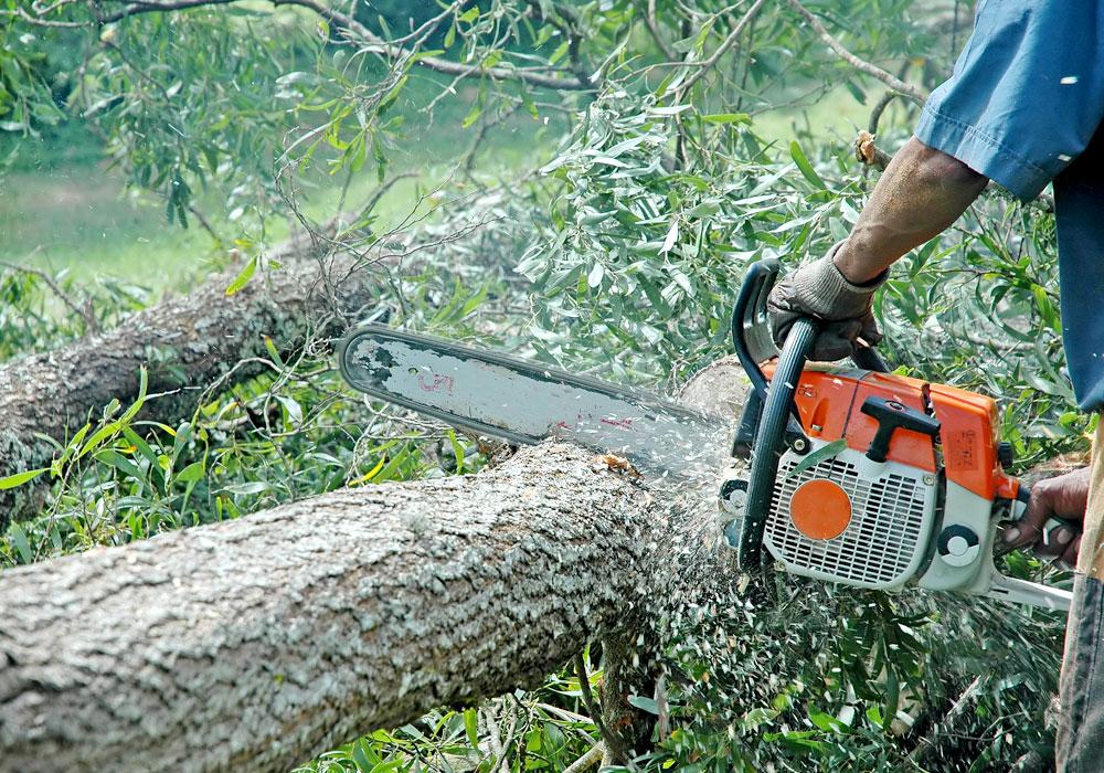 Dezbatere la Tg.Mureş pe tema tăierilor de arbori