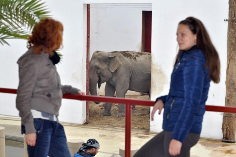 Singurii elefanți din România se află la Tg.-Mureș