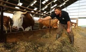 În câteva zile, toţi fermierii vor avea banii pe subvenţie în conturi