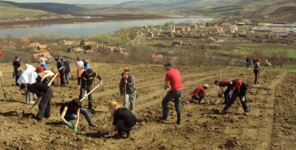 Un hectar de teren a fost astăzi împădurit la Laslăul Mare, județul Mureș
