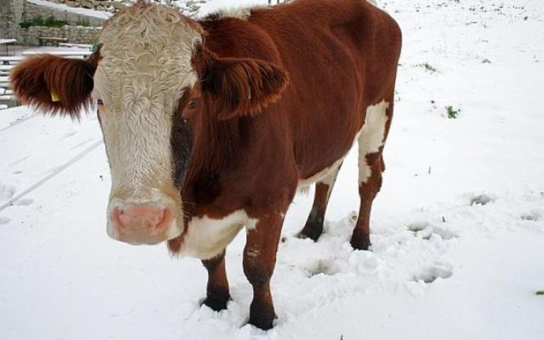 Recomandări importante de la ANSVSA pentru crescători de animale, transportatori şi organizatori de târguri