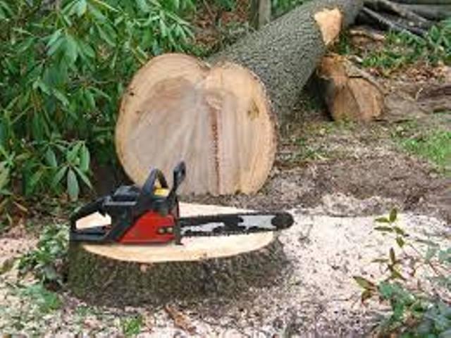 Pentru apărarea pădurilor