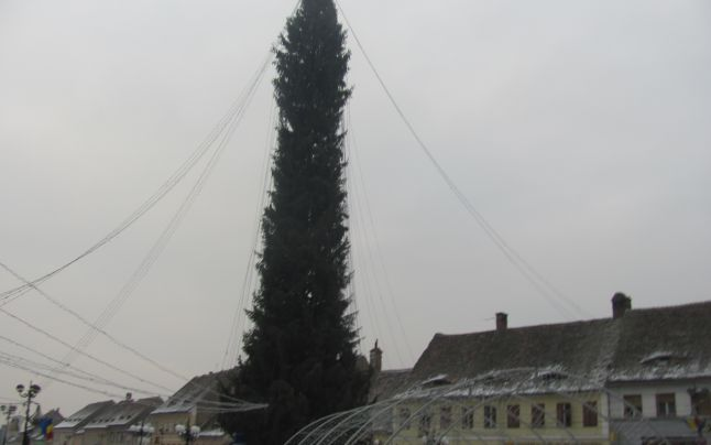 Cel mai mare brad de Crăciun din ţară se va aprinde în centrul oraşului Cisnădie