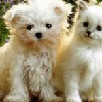 652x450_076976-taxa-pentru-caini-si-pisici