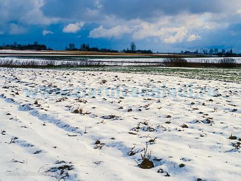 Tina-culturi-agricultură-iarna