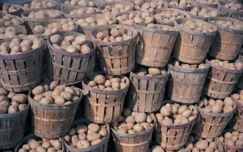 cartofii recolta.eu