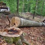 taieri ilegale lemn
