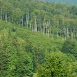 Prefectura Mureş se va implica într-o acţiune de împăduriri