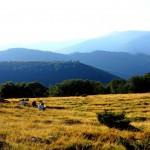 agricultura la munte