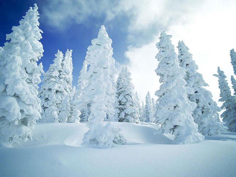 iarna fanatik ro