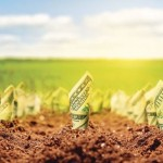 agricultura capital ro