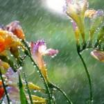 ploaia transilvaniareporter.ro