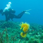viking-diving-hvar-1 worldstourist com