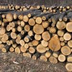 material_lemnos_campeni