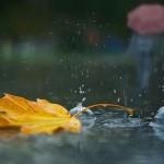 vreme rece
