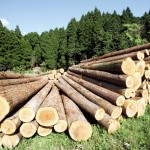 retrocedări-ilegale-păduri