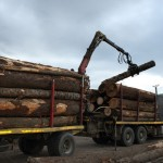 transport-lemn-2