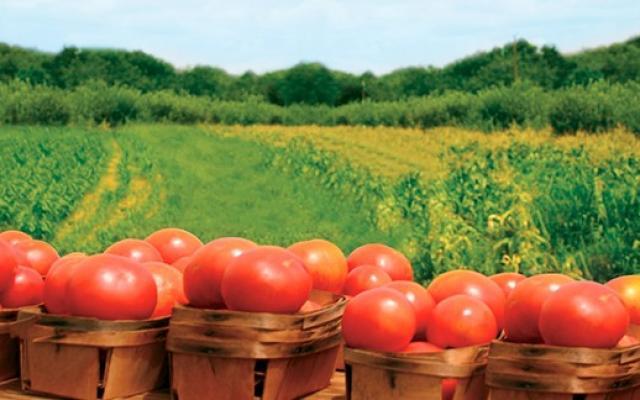 agricultura-ecologica-va-avea-la-dispozitie-o-baza-de-date-de-seminte-autohtone-9014