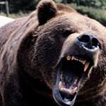 scary_bear_29117600
