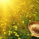 summer_sun_hat