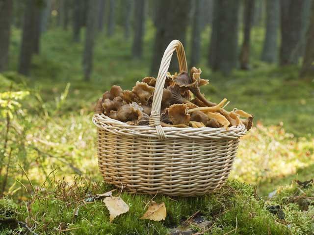 atentie-la-intoxicatiile-cu-ciuperci-1008976