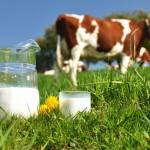 lapte-vaci
