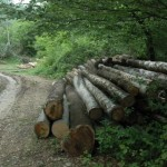 sector forestier
