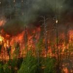Incendiu-de-proportii-in-Muntii-Retezat--Peste-50-de-pompieri-se-lupta-cu-flacarile-uriase-