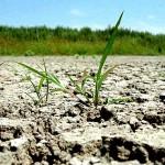 aproape-900-000-de-hectare-de-teren-agricol-au-fost-afectate-de-seceta-pana-acum-meteorologii-anunta-o-deprecierea-a-situatiei-culturilor-de-porumb-floarea-soarelui-si-cartof-274681-1