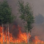bistrita-patru-hectare-de-padure-din-muntii-calimani-cuprinse-de-un-incendiu-15855806