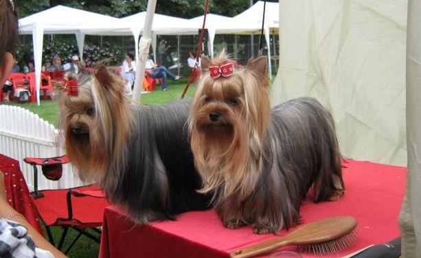 expo-canina