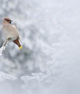 1-Grand-Prize-_-Nagy-Zoltan-Gergely_Romania_Winter-visitor
