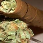 cannabis-1383299936