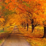 fall-scenery_78