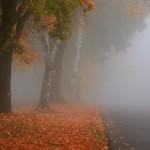 ceata iarna