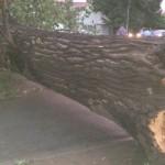 copaci-640x400
