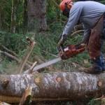 87331824_1_644x461_munca-in-domeniul-forestier-sibiu