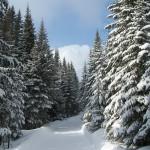 peisaje-de-iarna.blogspot.com
